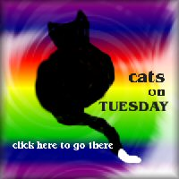 Tuesdaycat2