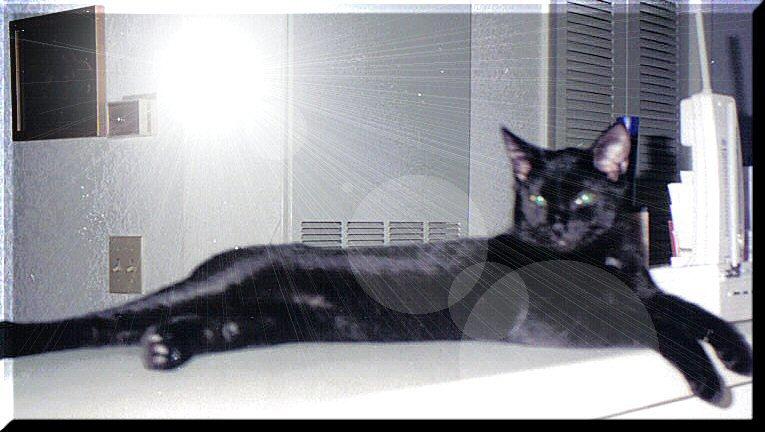 Babbythequeenofcats_4