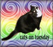 Tuesdaycat32photobutton