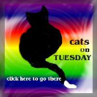 Tuesdaycatsm