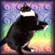 Goflatcatsmallplain
