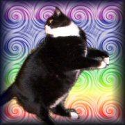 Goflatcatsmallplain_4
