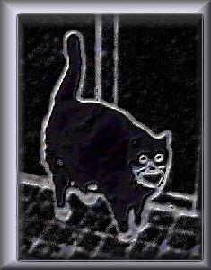 Happyflatcatsmall1