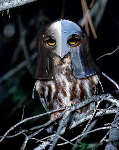 Knight_owl_2