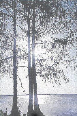 Treelightcrfinal22_3