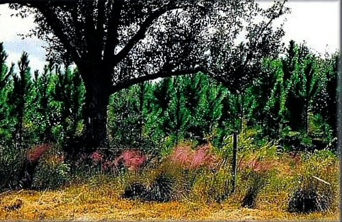 Highwaygrass