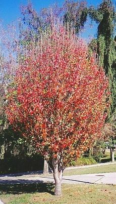 Redtreecrfinal