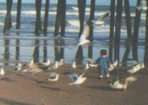 Beachbirdsboy0_2