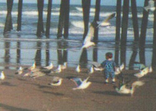 Beachbirdsboy0_2