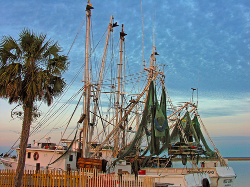 Shrimp_boats