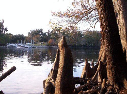 Cypressknees