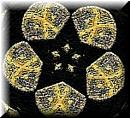 Goldbldgsclothstarbuttonlarge_2