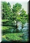 Inlandgreenlace2cr