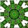 Reptileflower3xlmsst