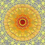 Sunflowerxl