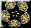 Goldbldgsclothstarbuttonlarge
